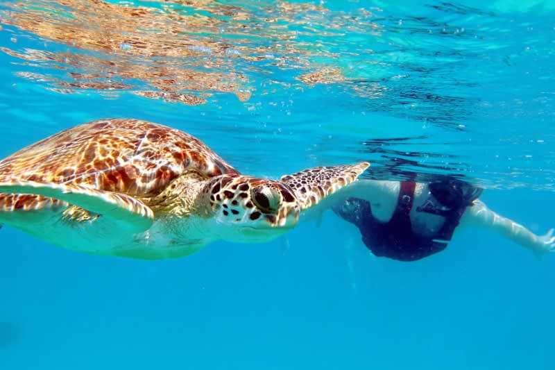 The 2 Best Snorkel Tours