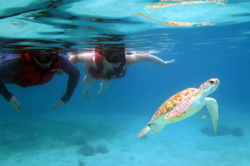 The 3 Best Kayak and Snorkel Tours
